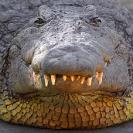 008_GSL.9165-Sogra-Croc-I-Like-You