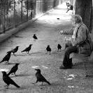 016_UFr.1640BW-Bird-Feeder-Paris