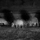 018_MH.1181BW-Night-Giants-Luangwa-Valley-Zambia