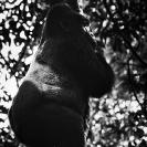 020_MApG.03BWB-Highland-Mountain-Gorilla-Bwindi-Uganda