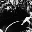 022_MApG.06BW-Highland-Mountain-Gorilla-Bwindi-Uganda