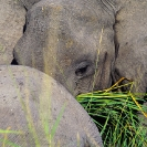 003_ME.604-African-Elephant-abstract-Luangwa-Valley-Zambia