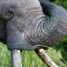 006_ME.0997V-African-Elephant-Bull-rubbing-Luangwa-Valley