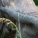 008_ME.1000-African-Elephant-Bull-close-up-Luangwa-Valley