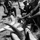 013_Po.500VBWA-EXTINCT-Black-Rhino-Skulls-Luangwa-Valley-Zambia