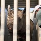 031_Po.2375-Black-Rhino-&-Vet-Translocation