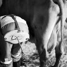 018_TSe.254141VBW-Milking-Time-Sweden