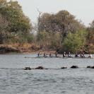 005_SZmR.0359-Rowing-&-Zambezi-Wildlife-Cape-Town-Crew-&-Hippos